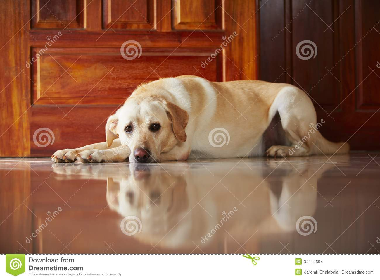 dog at home stock images image 34112694