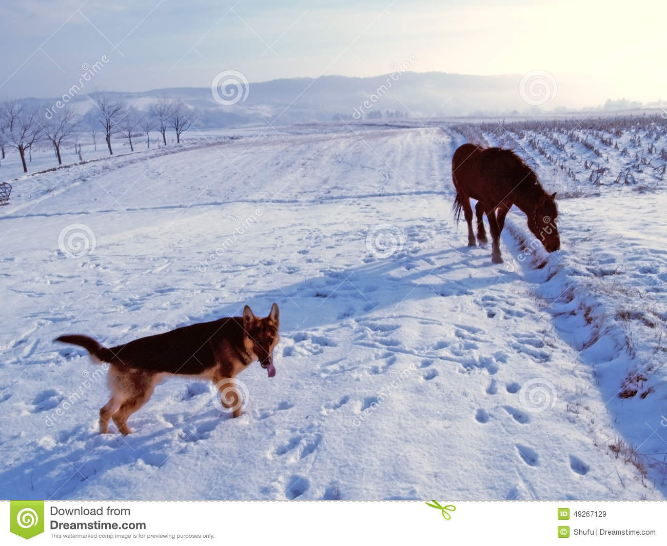 Download Dog and horse stock image. Image of outdoors, nature - 49267129