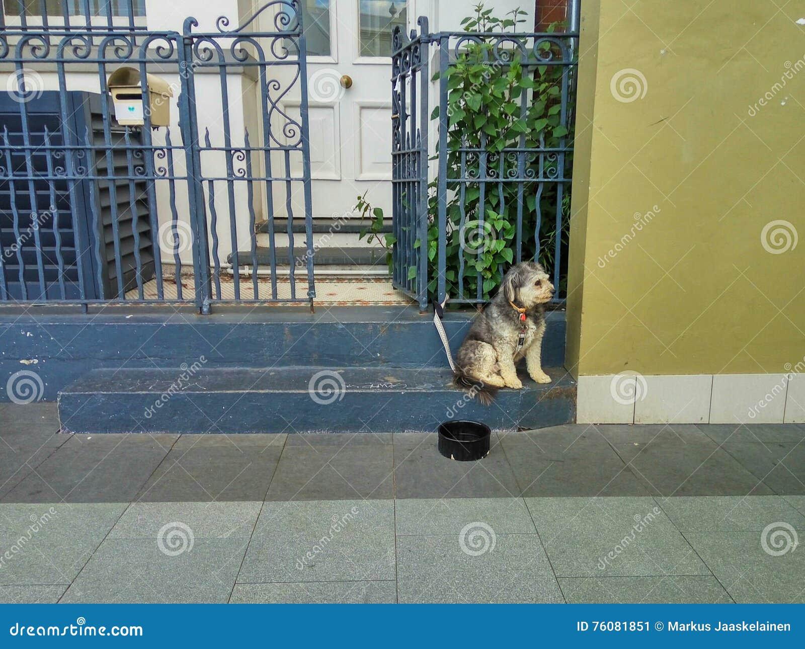 Dog at House Gate