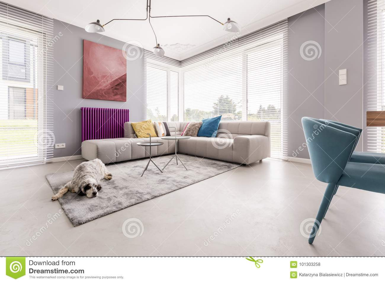Dog in a house interior stock photo Image of cushions  : dog house interior dog house interior lying soft grey carpet next to large sofa elegant abstract painting 101303258 from www.dreamstime.com size 1300 x 957 jpeg 111kB