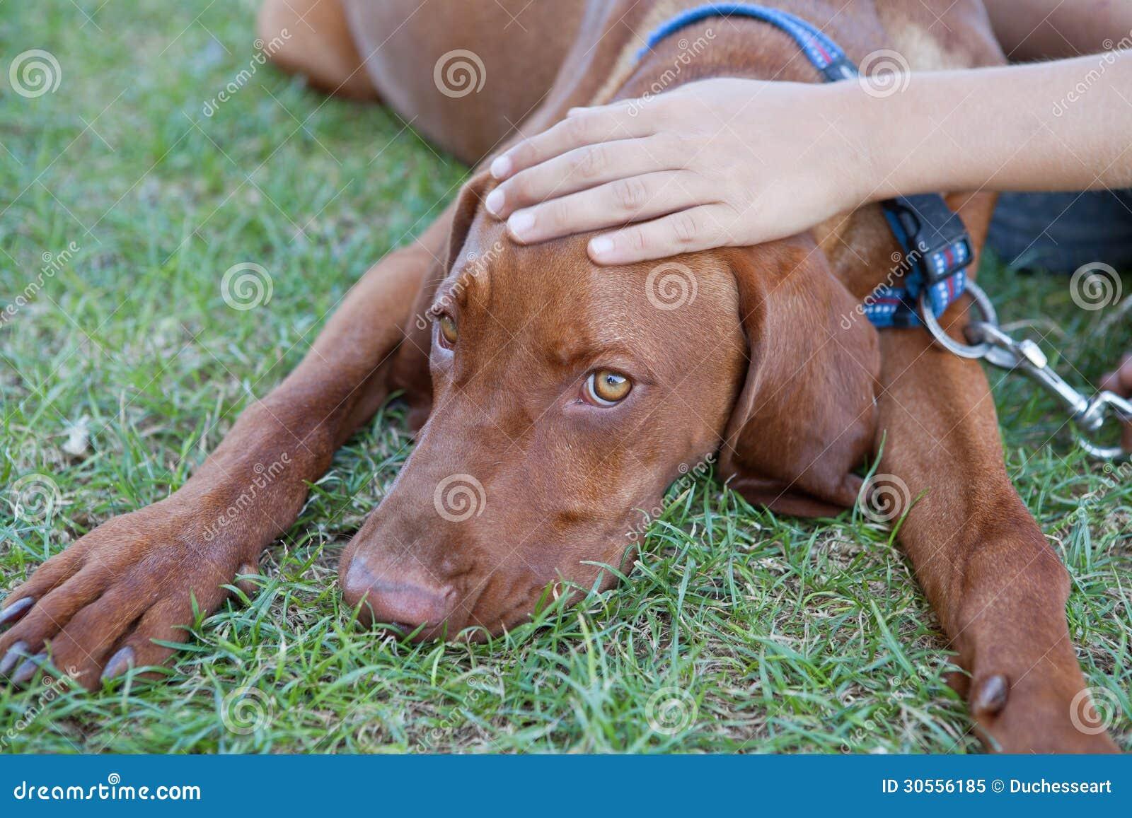Dog Royalty Free Stock Photo - Image: 30556185