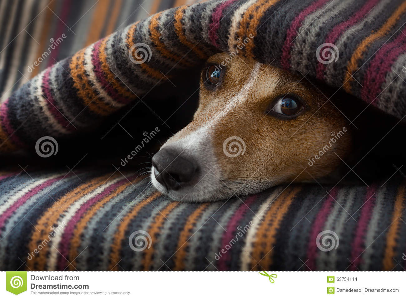 Dog Ill Or Sleeping Stock Photo Image 63754114