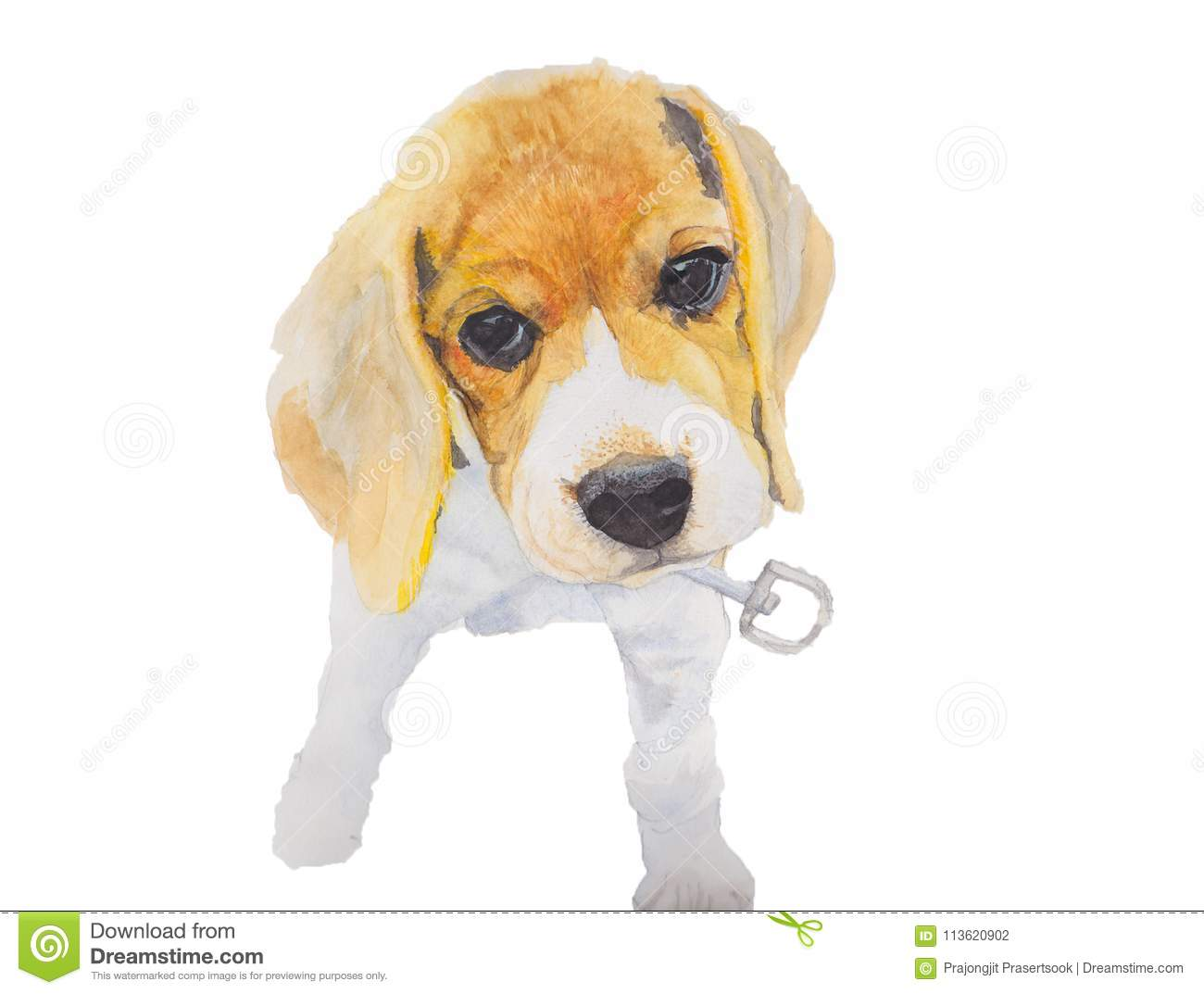 Dog Isolated On White Background Beagle Dog Hand Painted Watercolor Illustration Stock Illustration Illustration Of Beagle Drawn 113620902