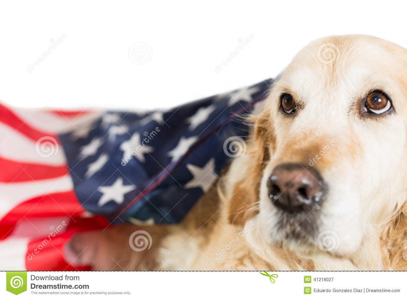 Dog with its American flag