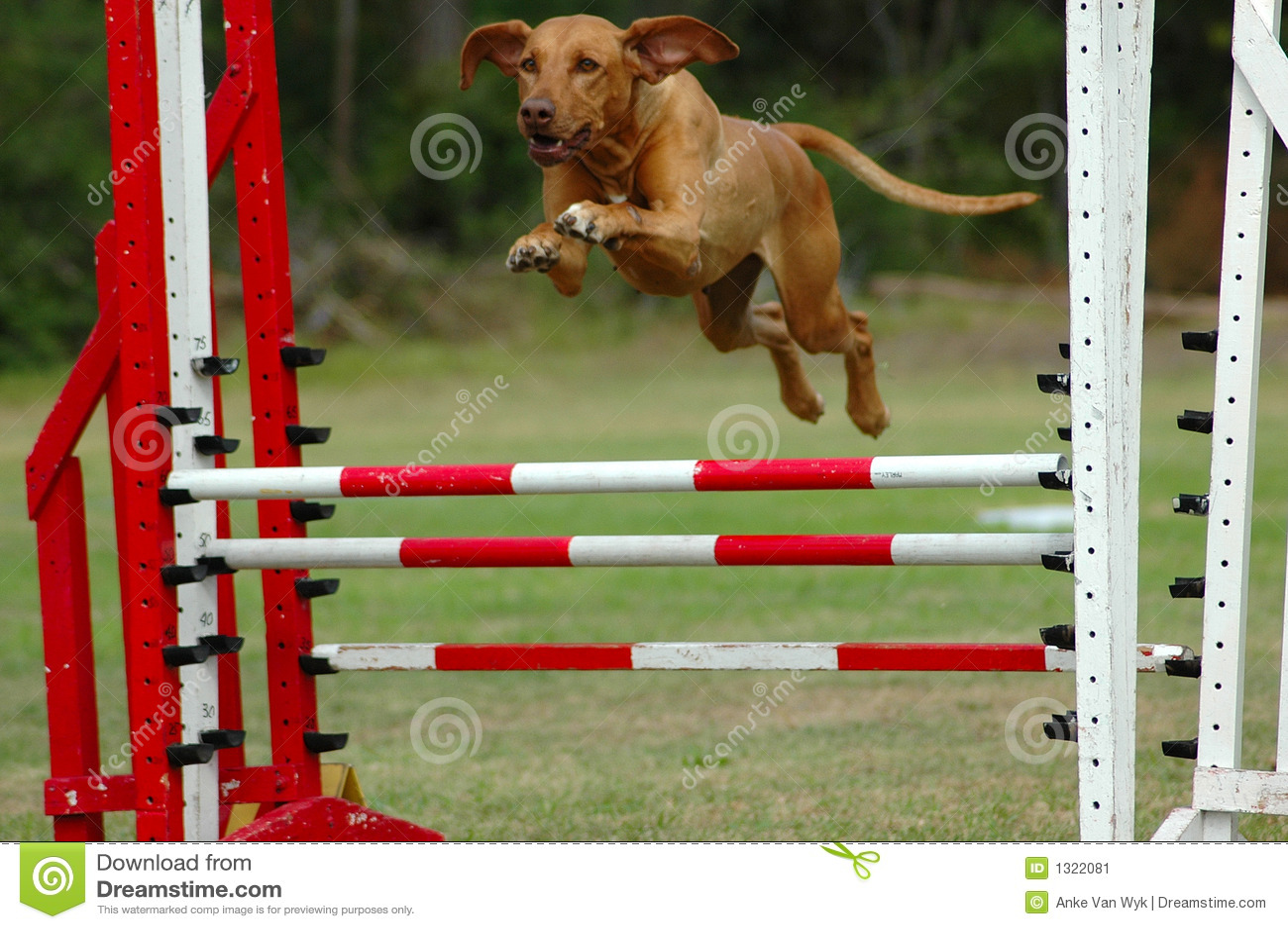 Best In Breed Dog Training