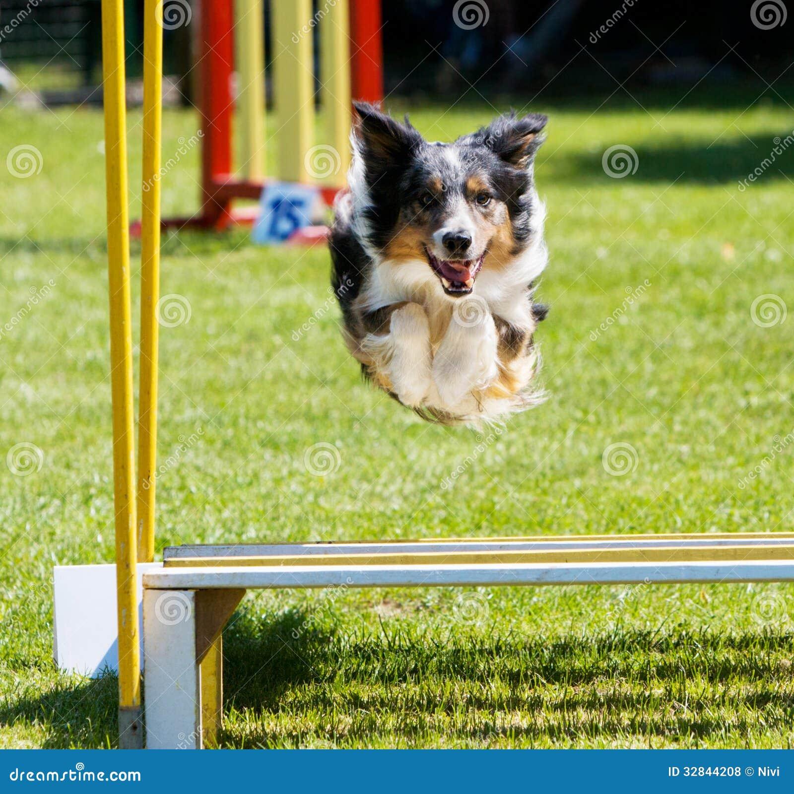 5 описание щенков: инбридинг на элвиса 1:3 дубль-помет