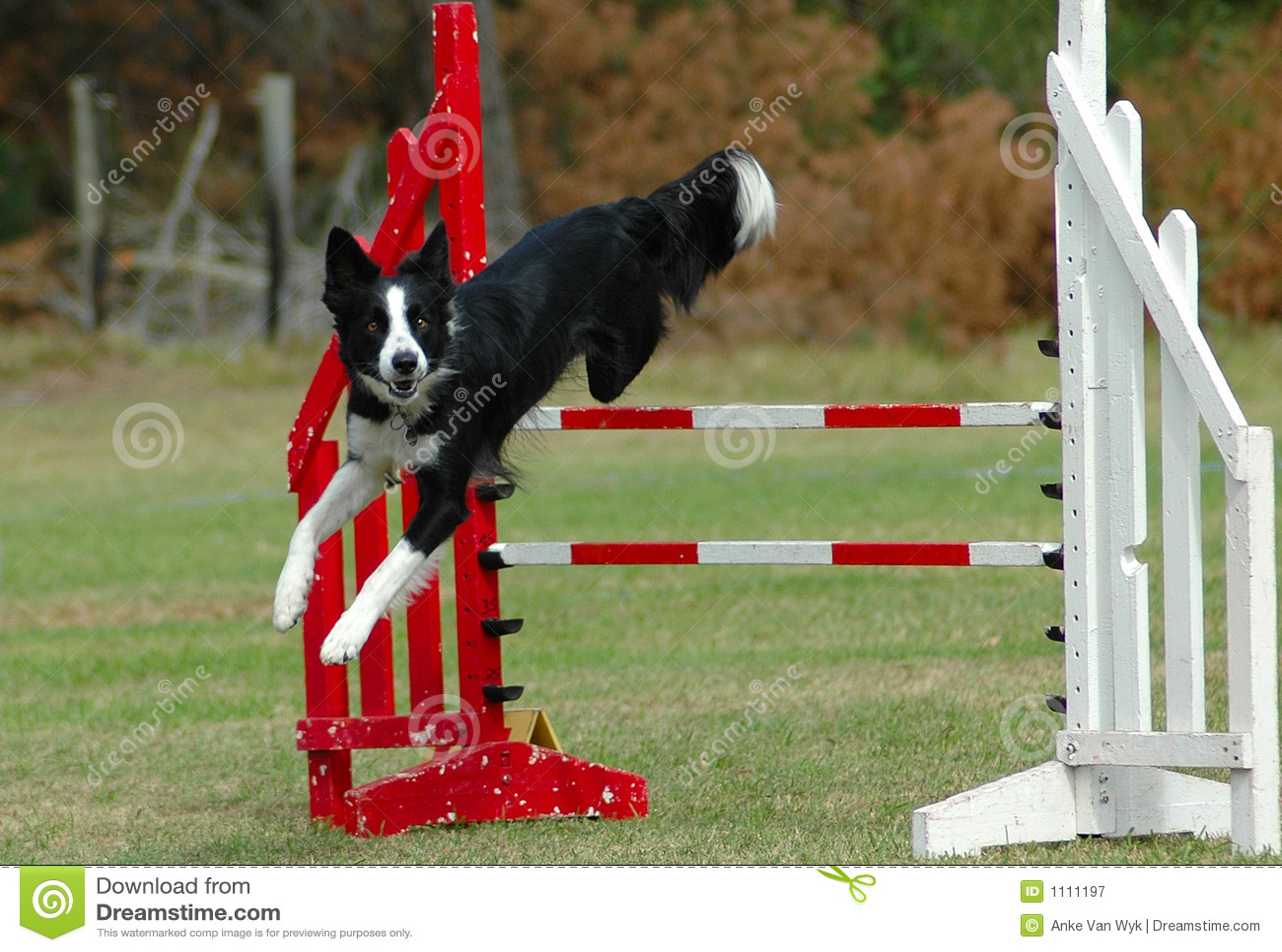 Dog Free Jumping