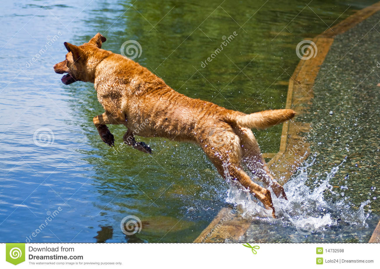 dog jumping into water royalty free stock photos image free clipart summer scenes free clipart summertime