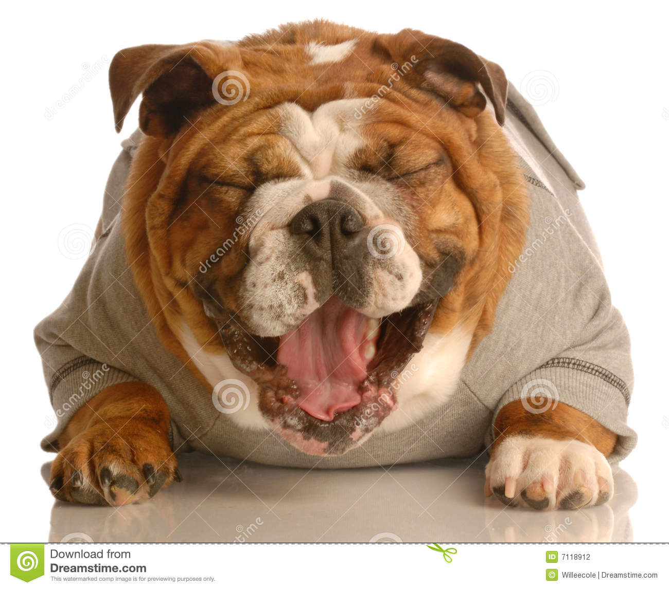 Dog Laughing Stock Photography - Image: 7118912 - photo#50
