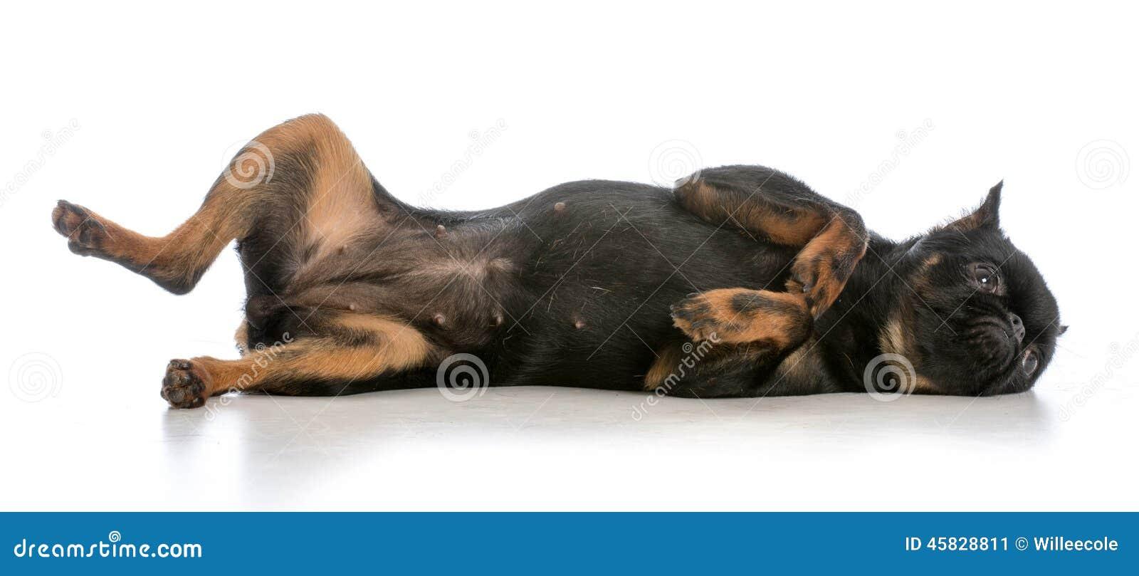 dog laying on back