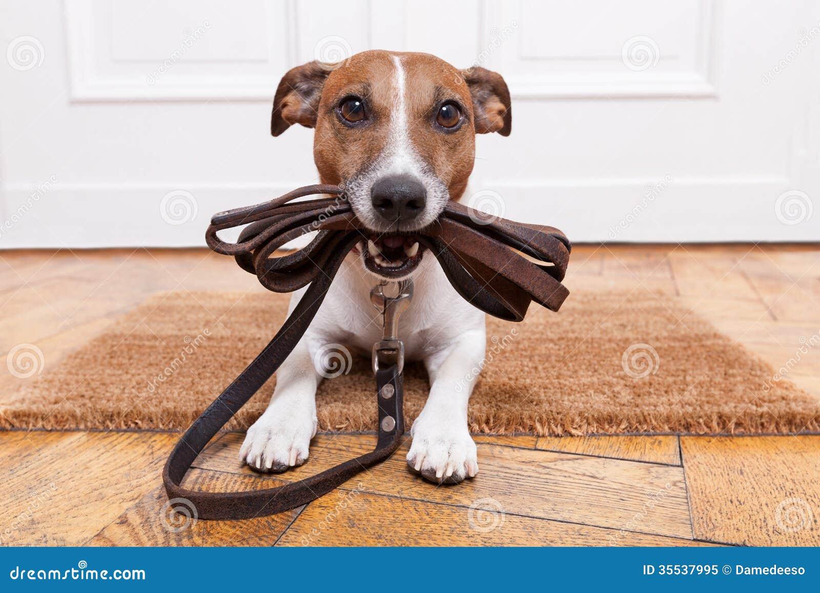 Dog Leather Leash Royalty Free Stock Photo Image 35537995