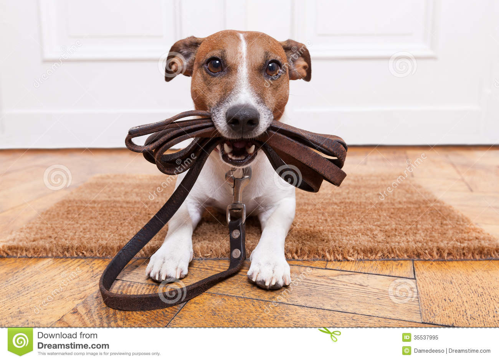 Go Walkies Dog Training