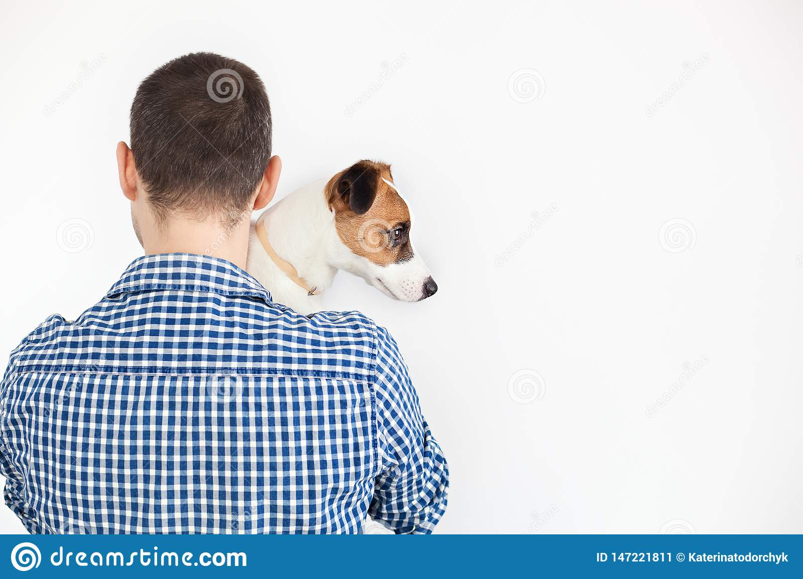 The dog lies on the shoulder of its owner. Jack Russell Terrier in his owner`s hands on white background. The concept of people an