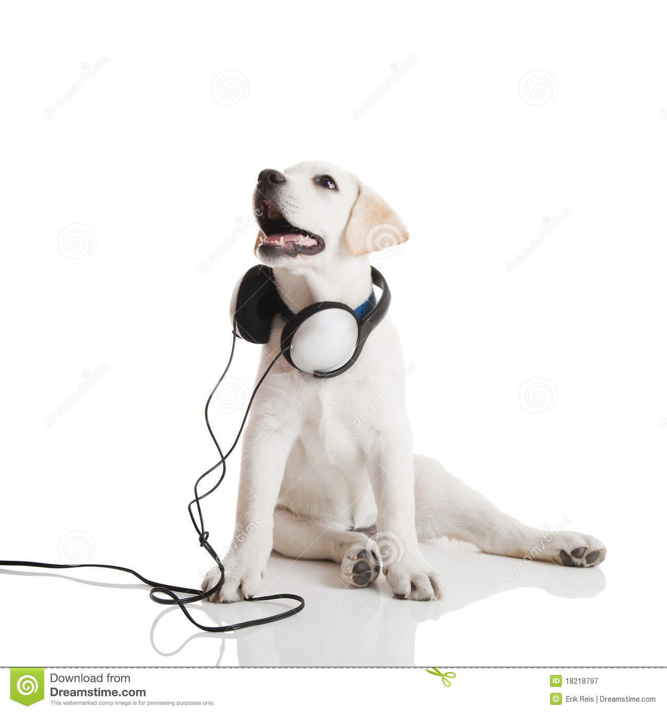 Dog listening to music stock image. Image of goofy, enjoy ...