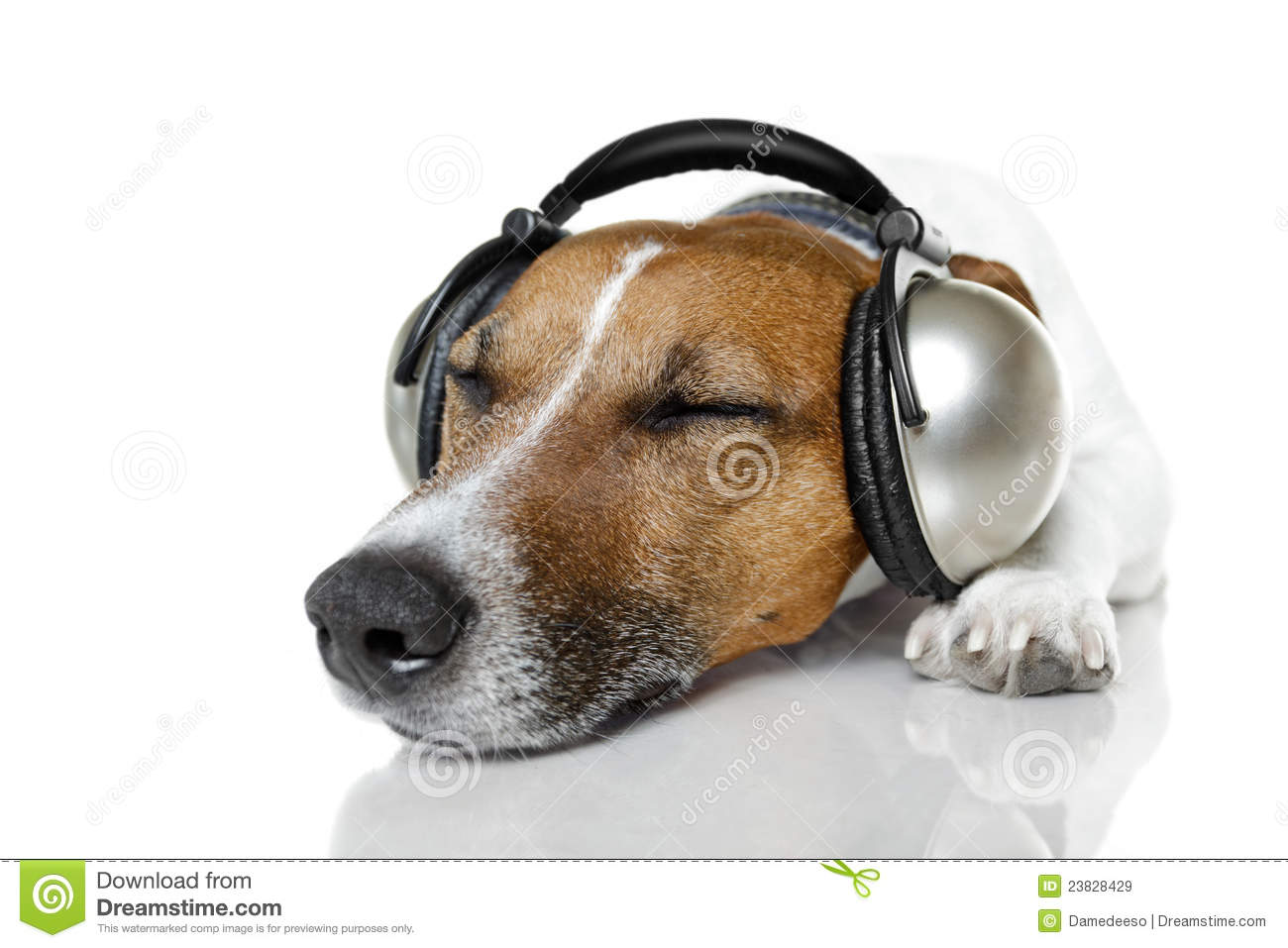 Dog Listening To Music Royalty Free Stock Images - Image ...