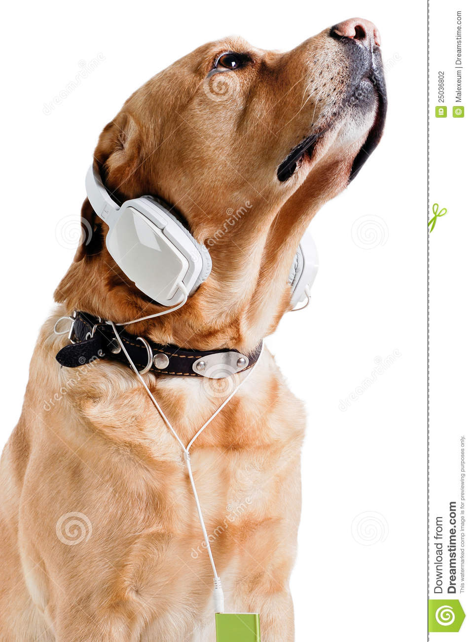 Dog listening to music stock photo. Image of shot, ideas ...