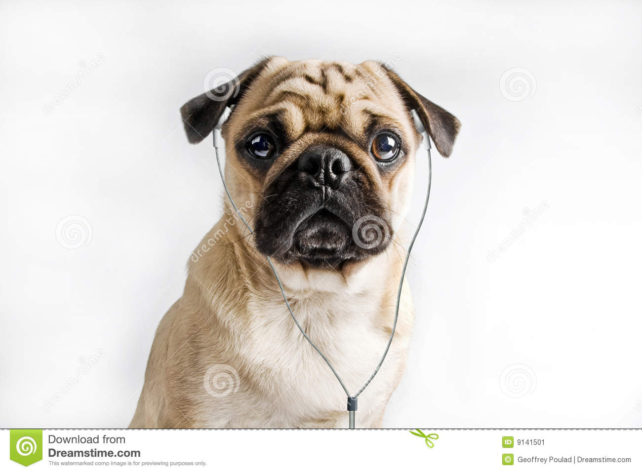 Dog Listening To Music Stock Image - Image: 9141501