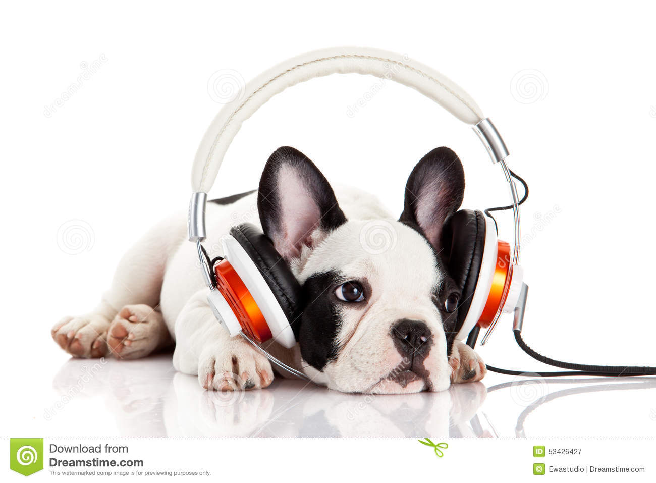 Dog Listening To Music With Headphones Stock Photo - Image ...