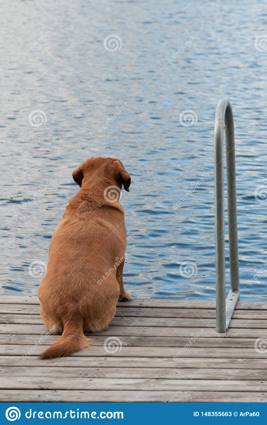 Dog is lonely and waiting her owner to come back.