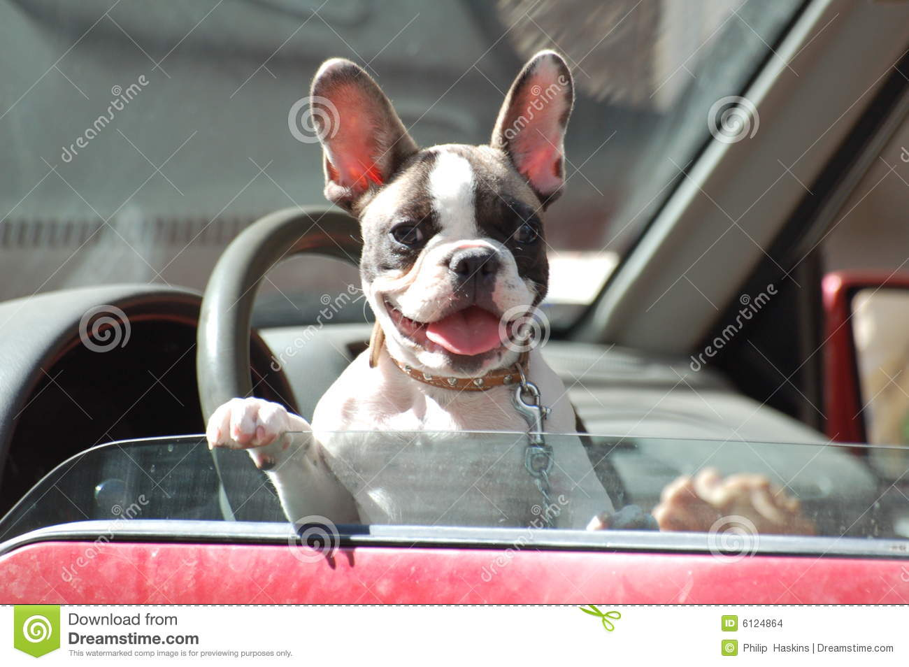 Dog looking from Car window