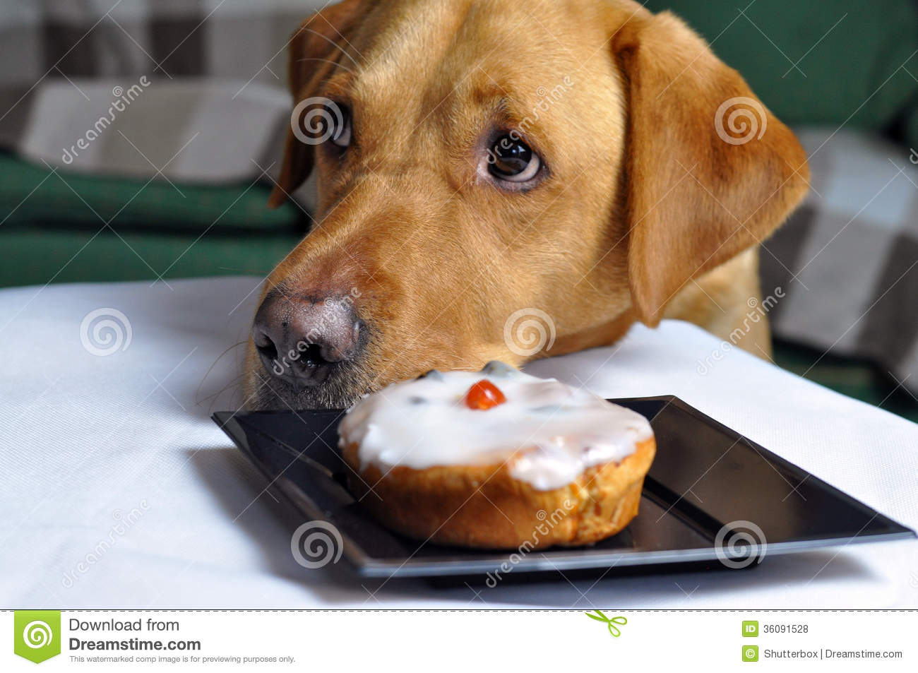 Dog Stealing Food Royalty Image