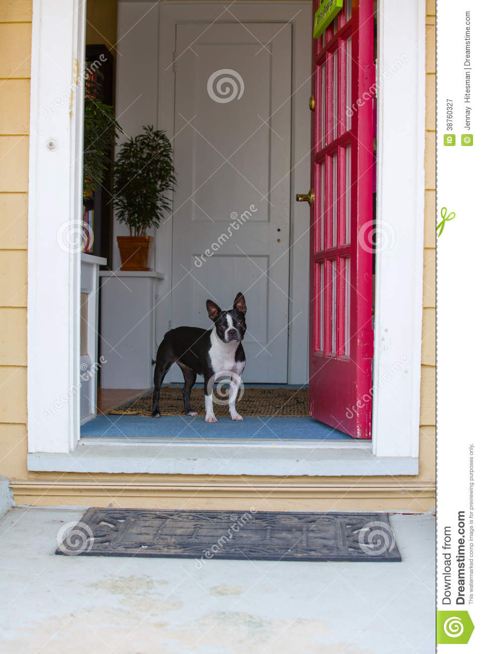 Dog Looking Out The Front Door Royalty Free Stock
