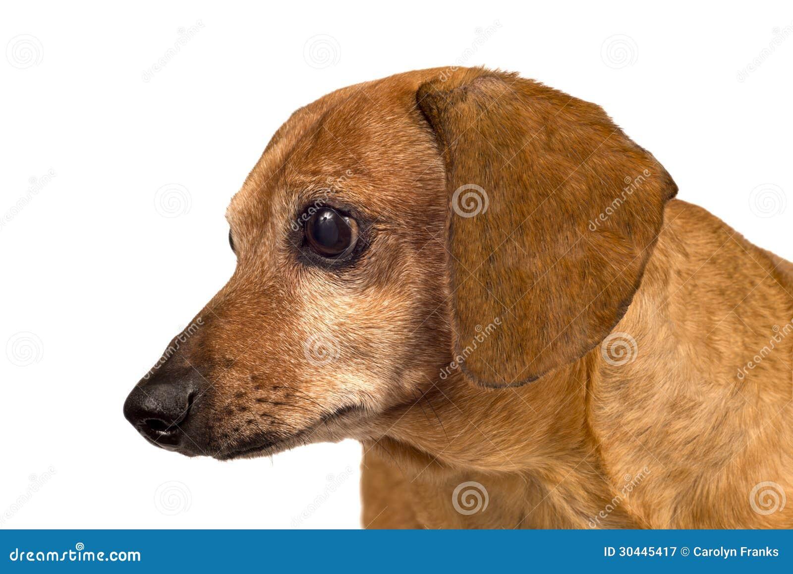 Dog Looking Sideways Close Up Stock Image - Image of