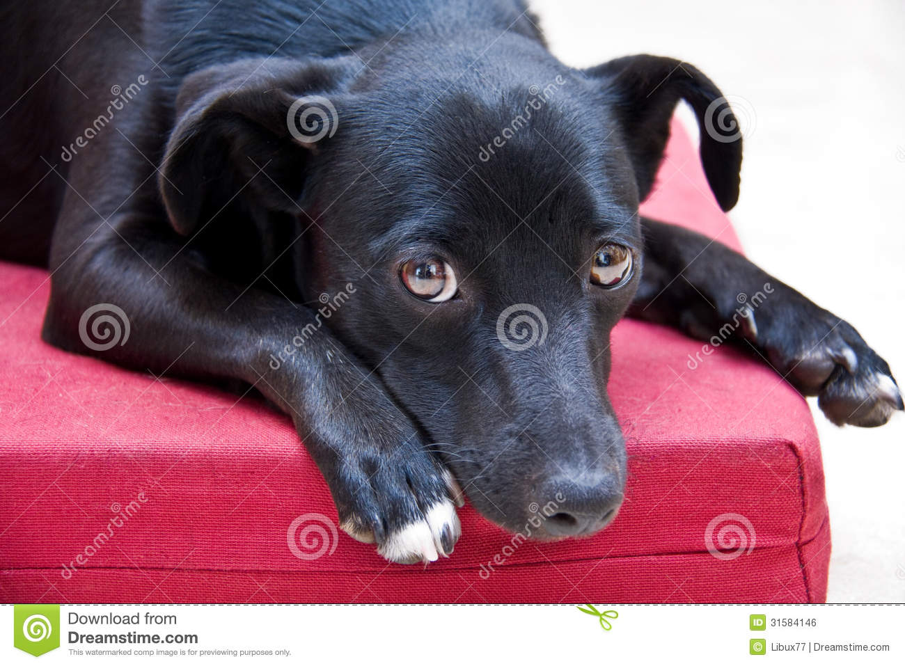 Dog Looking with Sweet Eyes