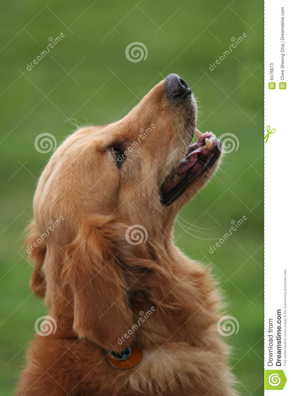 dog looking up to his master stock photos image 6476673