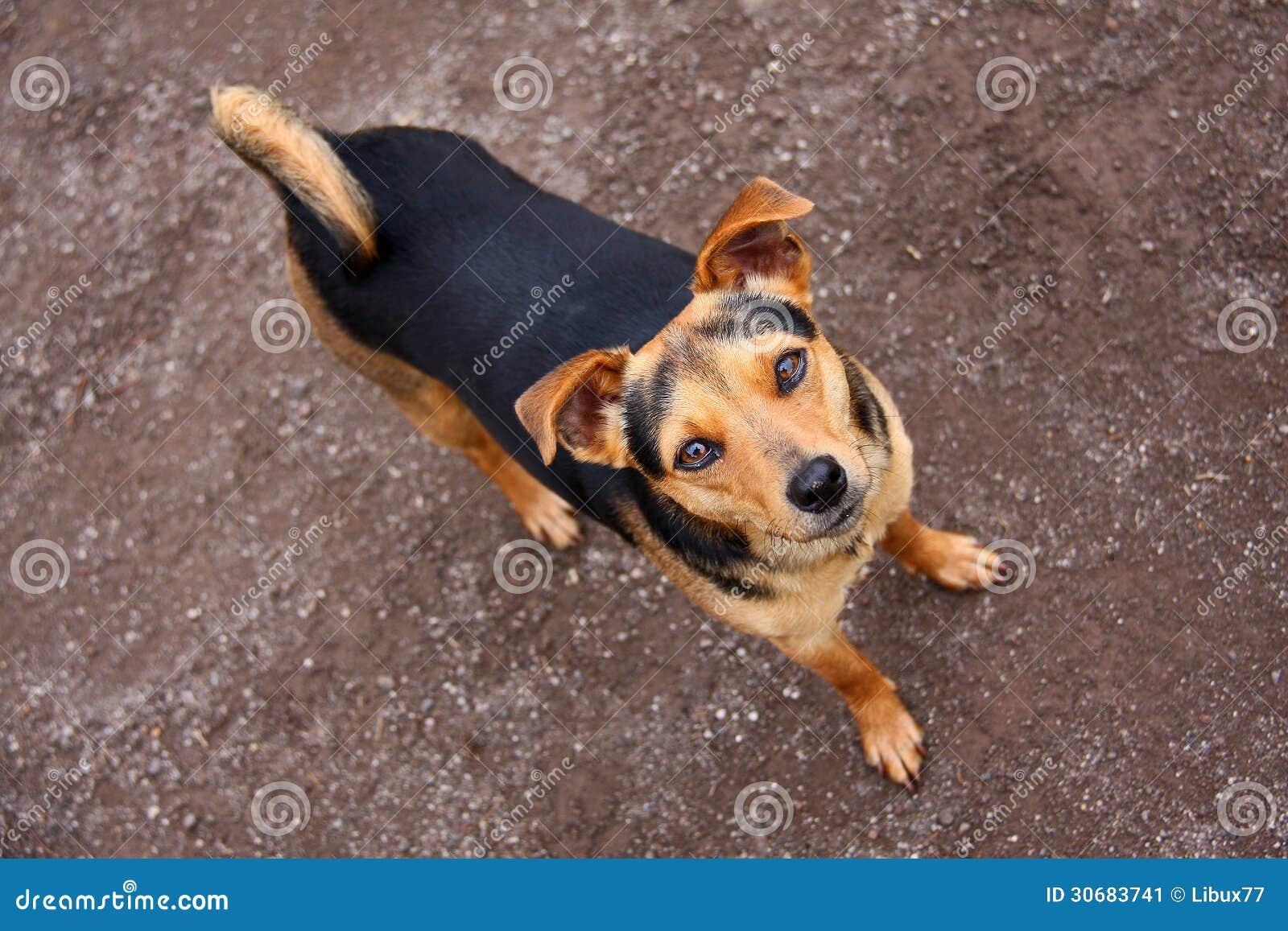 Dog Looking Upward Stock Image Image 30683741