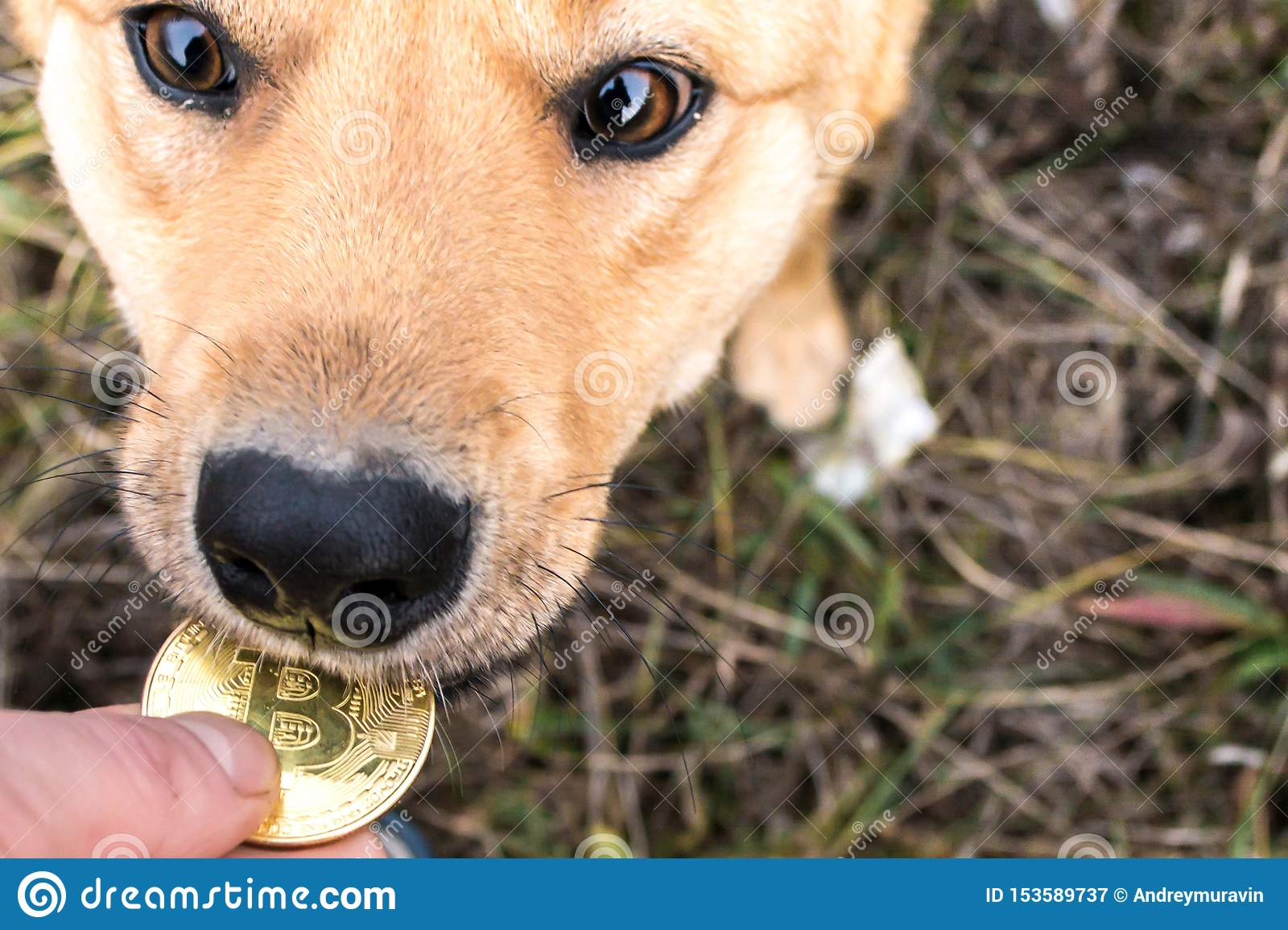Bitcoins pictures of dogs boylesports betting rules of 21