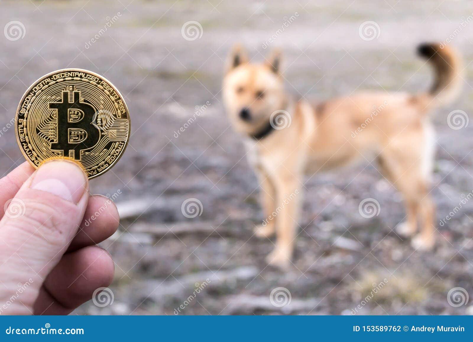 Convert dog coins to bitcoins mining kleinbettingen creche manhattan