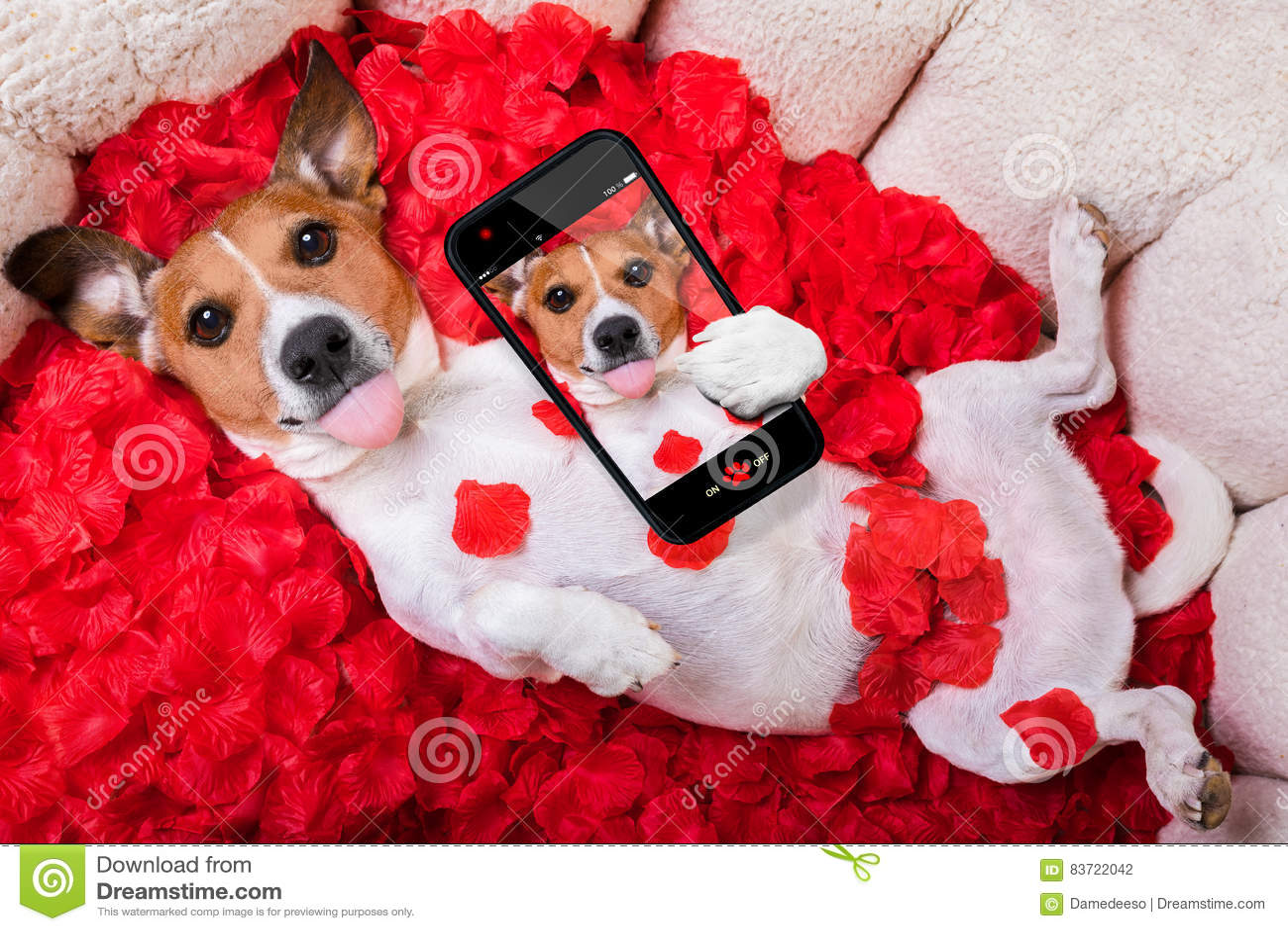 Dog Love Rose Valentines Selfie Stock Photo