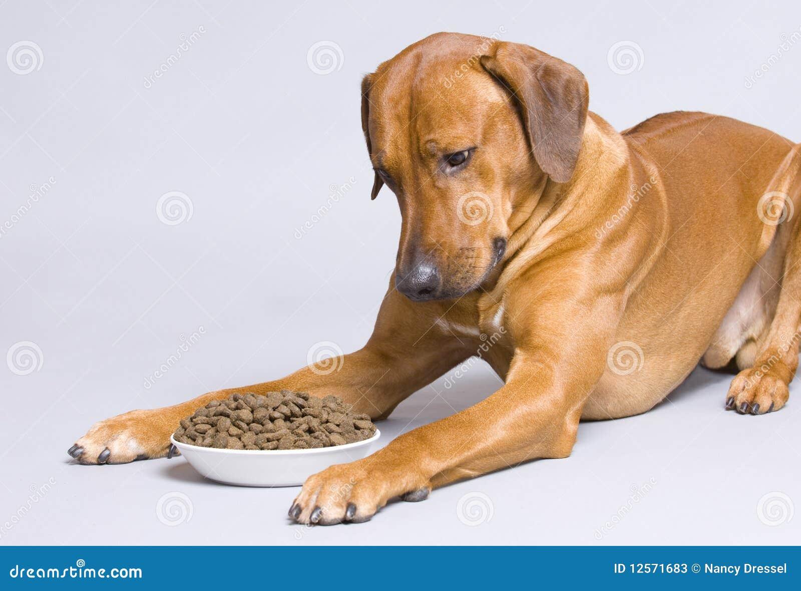 Dog lying at full food bowl