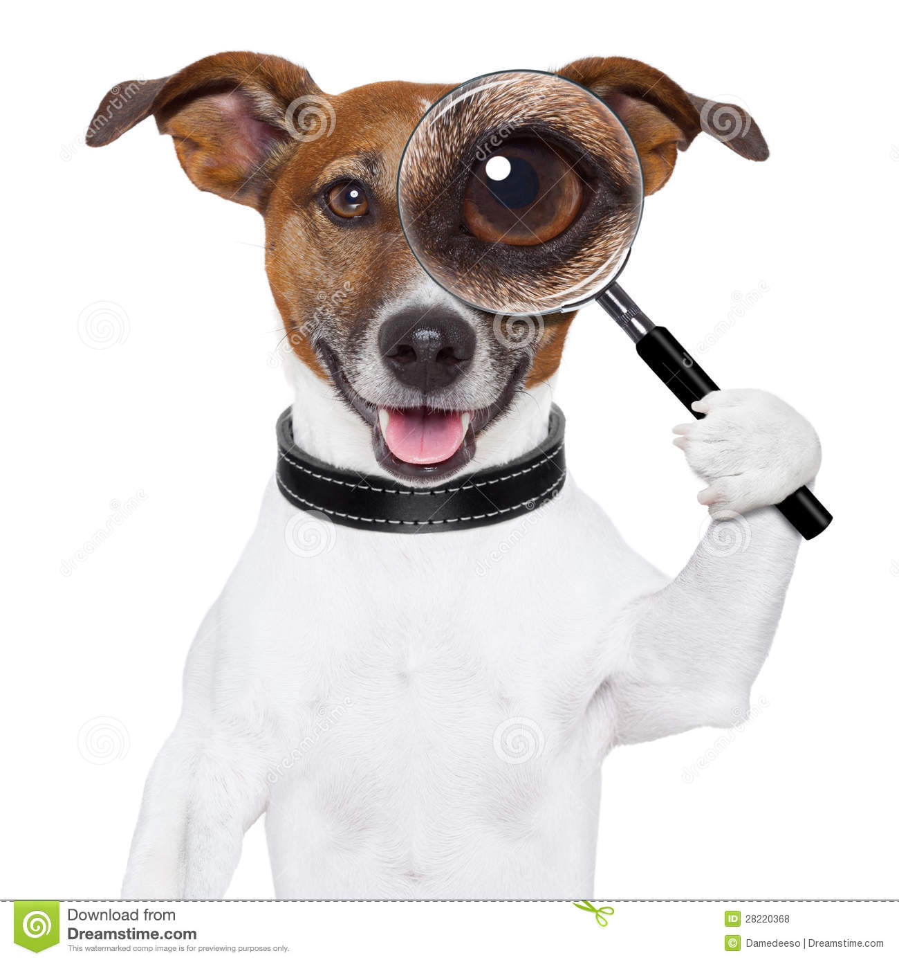 Dog With Magnifying Glass Royalty Free Stock Photos Image 28220368