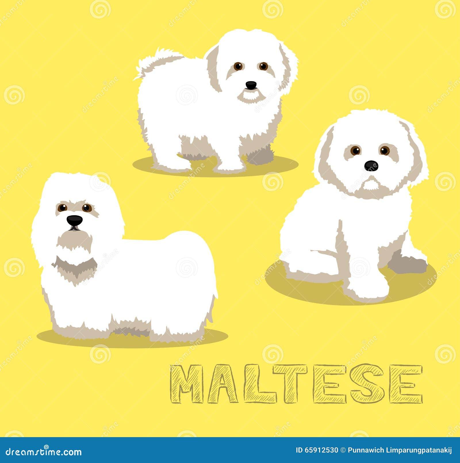 free clipart maltese dog - photo #35