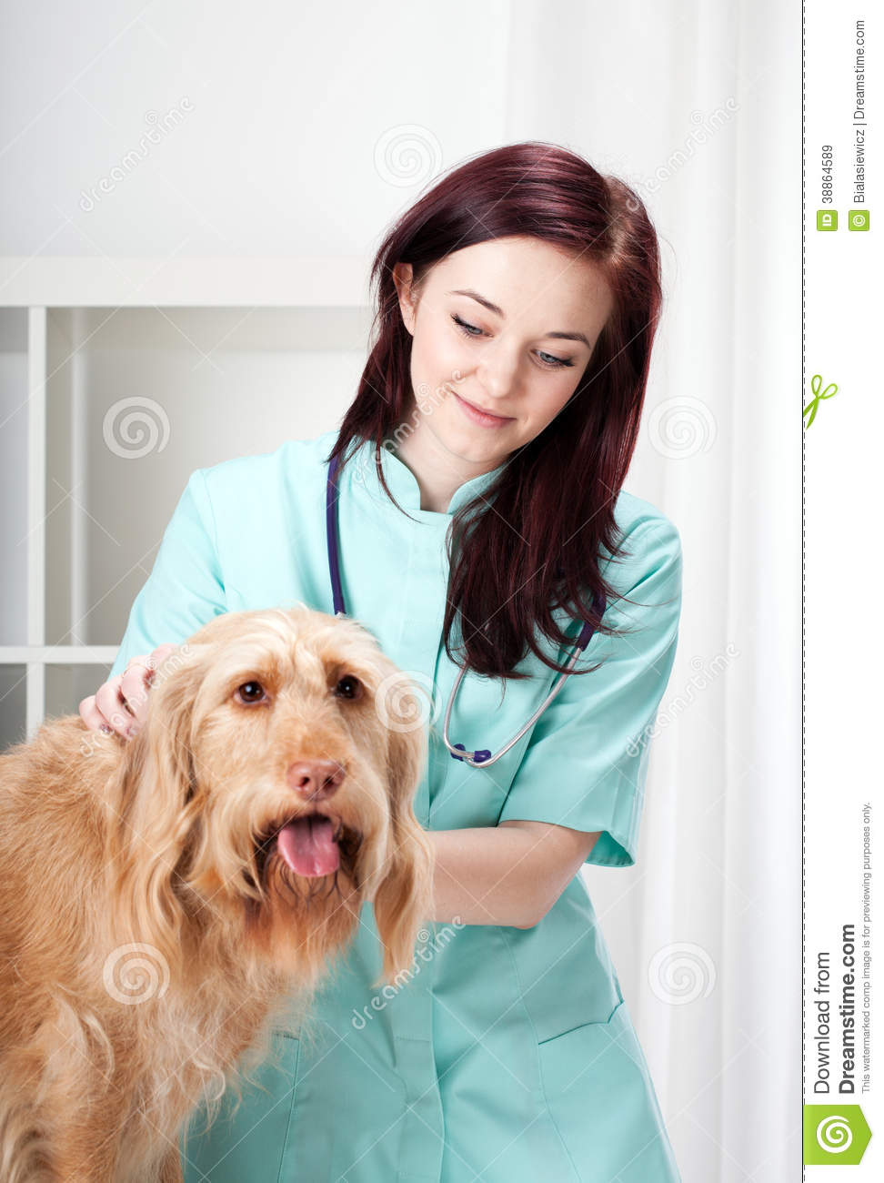Dog during medical appointment