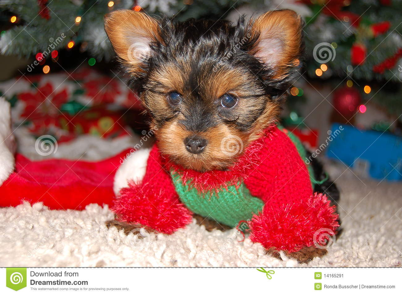 Dog Modeling Christmas Sweater Stock Image Image Of Green Tired