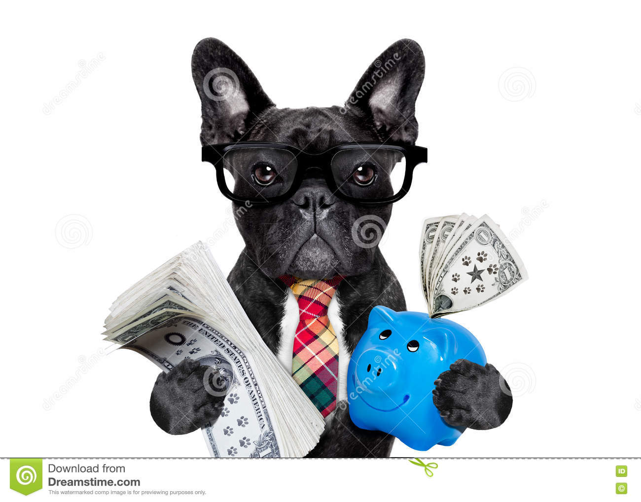 Download Dog money and piggy bank stock image. Image of bulldog - 75126771