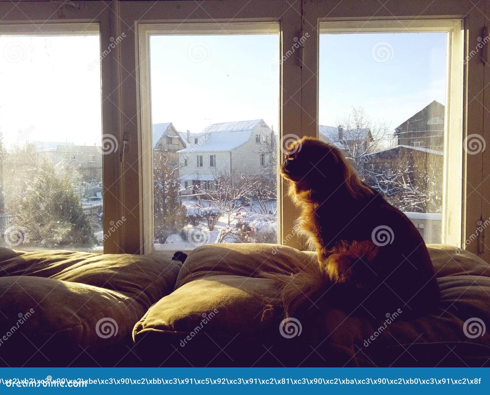 Dog near the window