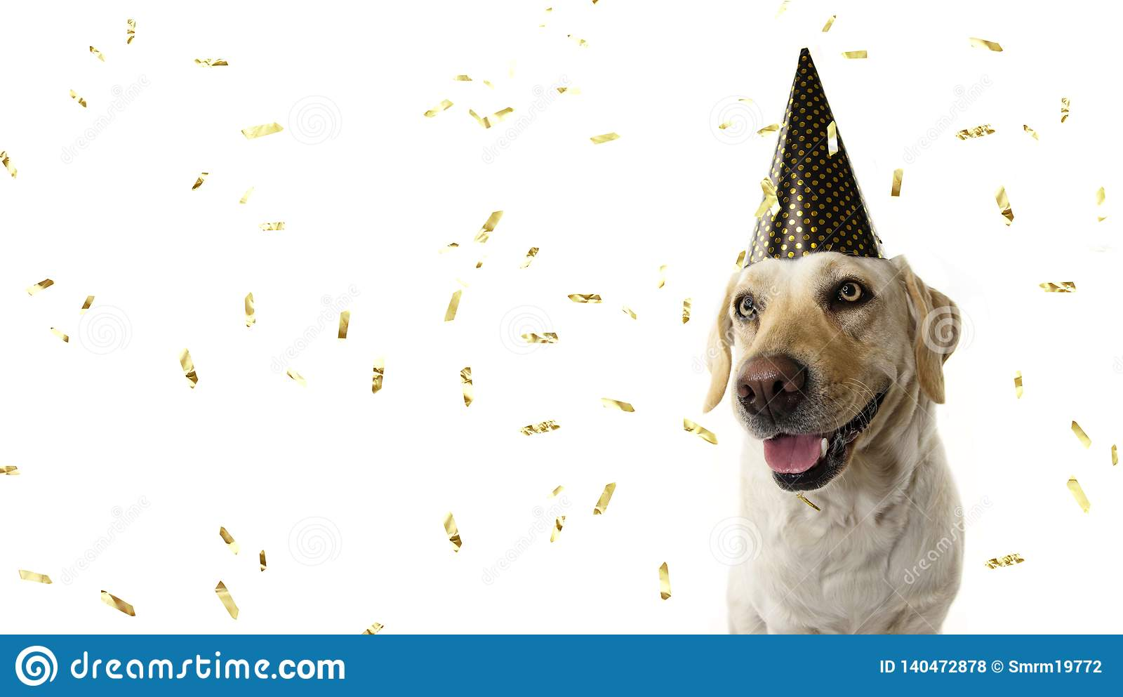 DOG NEW YEAR OR BIRTHDAY PARTY HAT. FUNNY LABRADOR SITTING