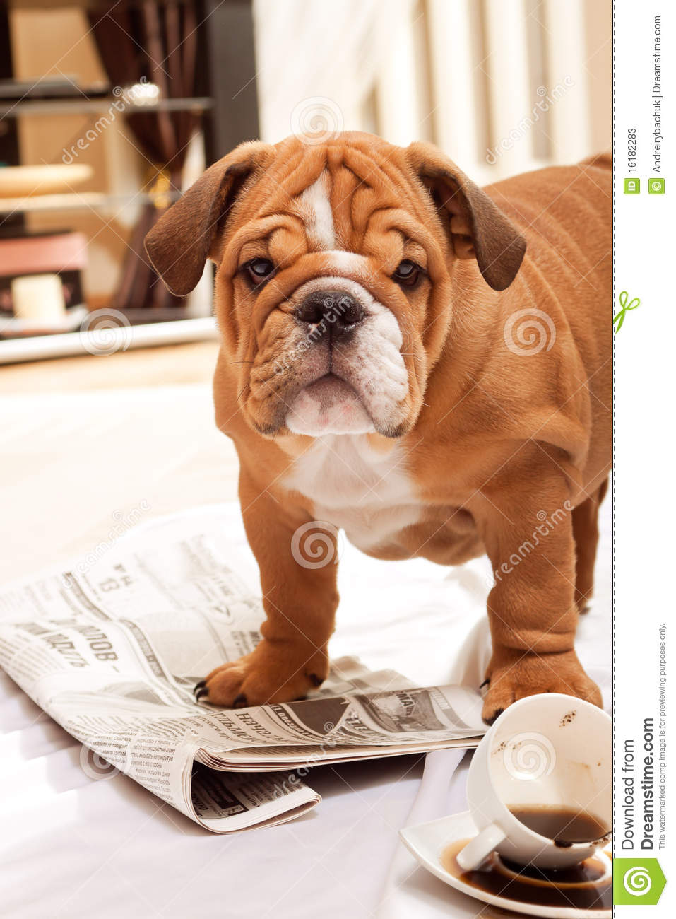 Download Dog, A Newspaper And Spill Coffee. Stock Image - Image of newspaper, bulldog: 16182283