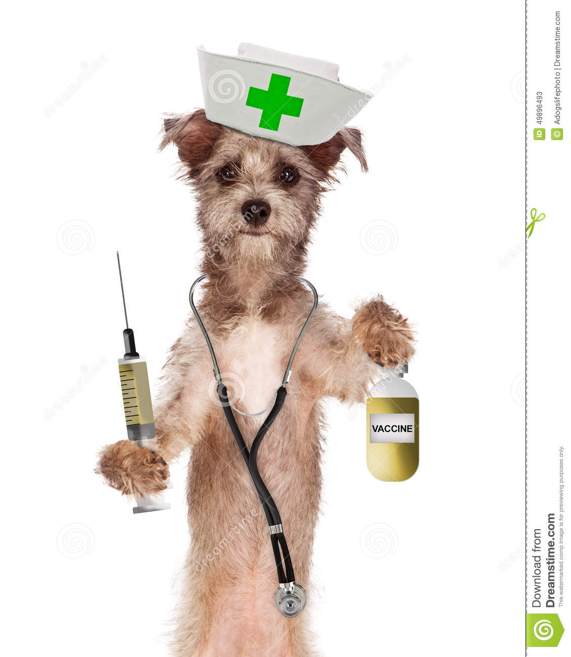 Cute dog dressed as a nurse with a stethoscope, vaccination bottle and ...