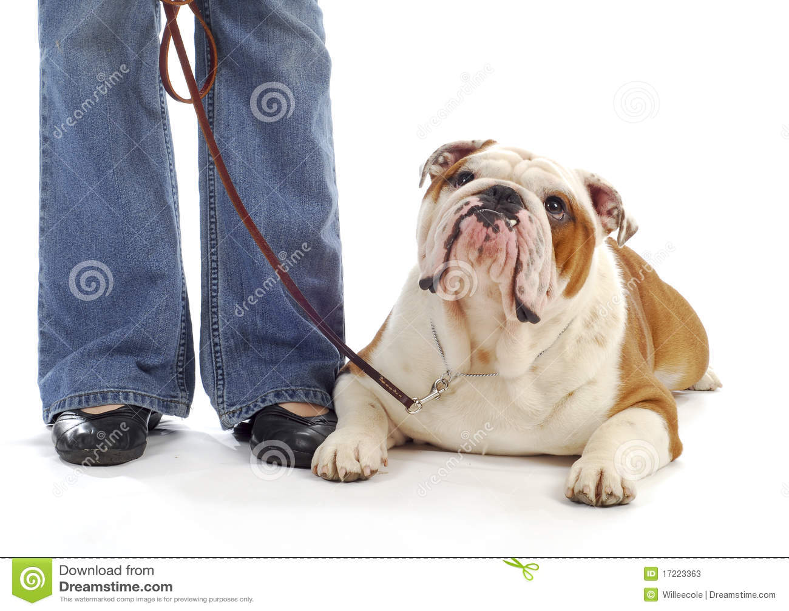 help bet365 bet365 jobs festival park Dog Obedience Training