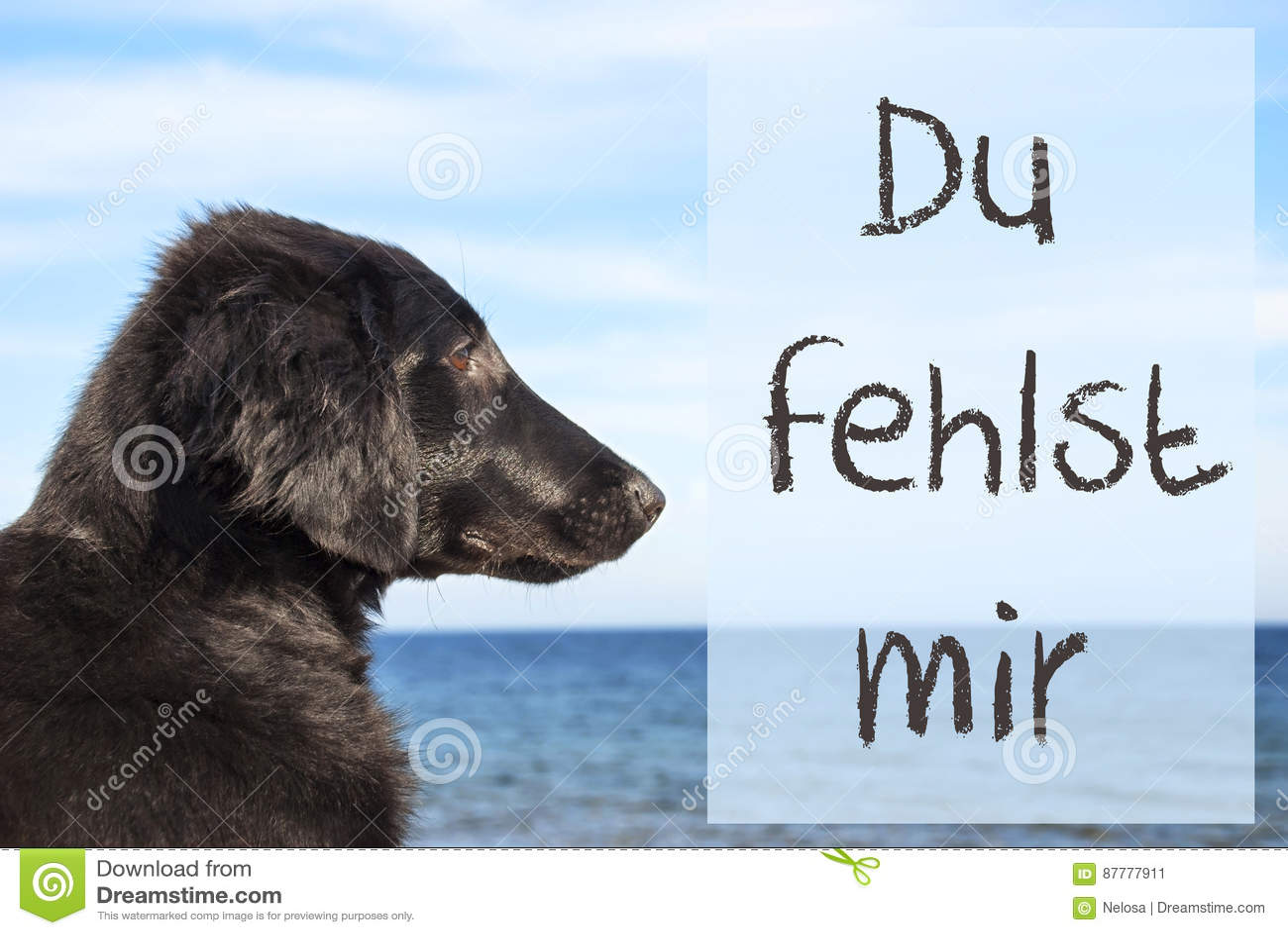 Dog At Ocean, Du Fehlst Mir Means I Miss You Stock Image