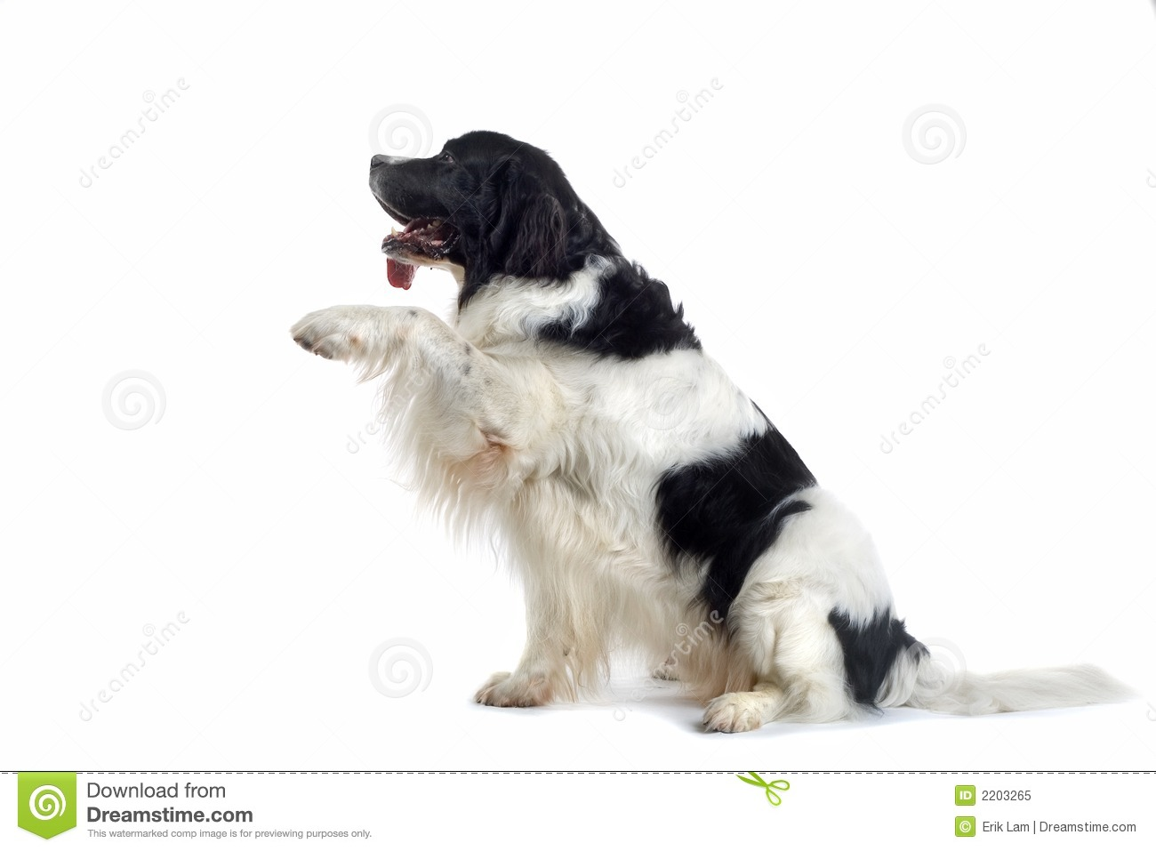 Dog Offering Paw Free Image