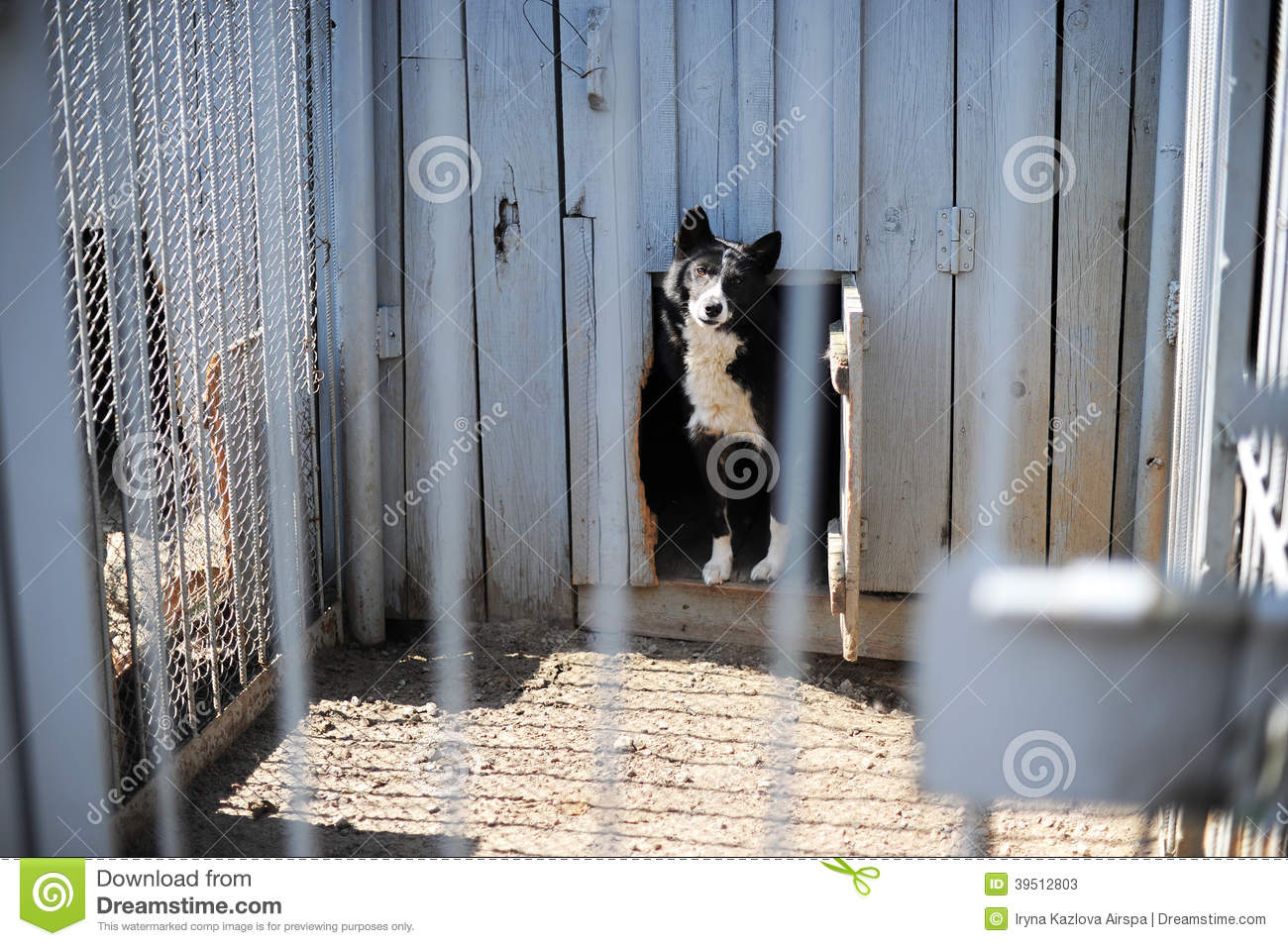 Dog in the open-air cage