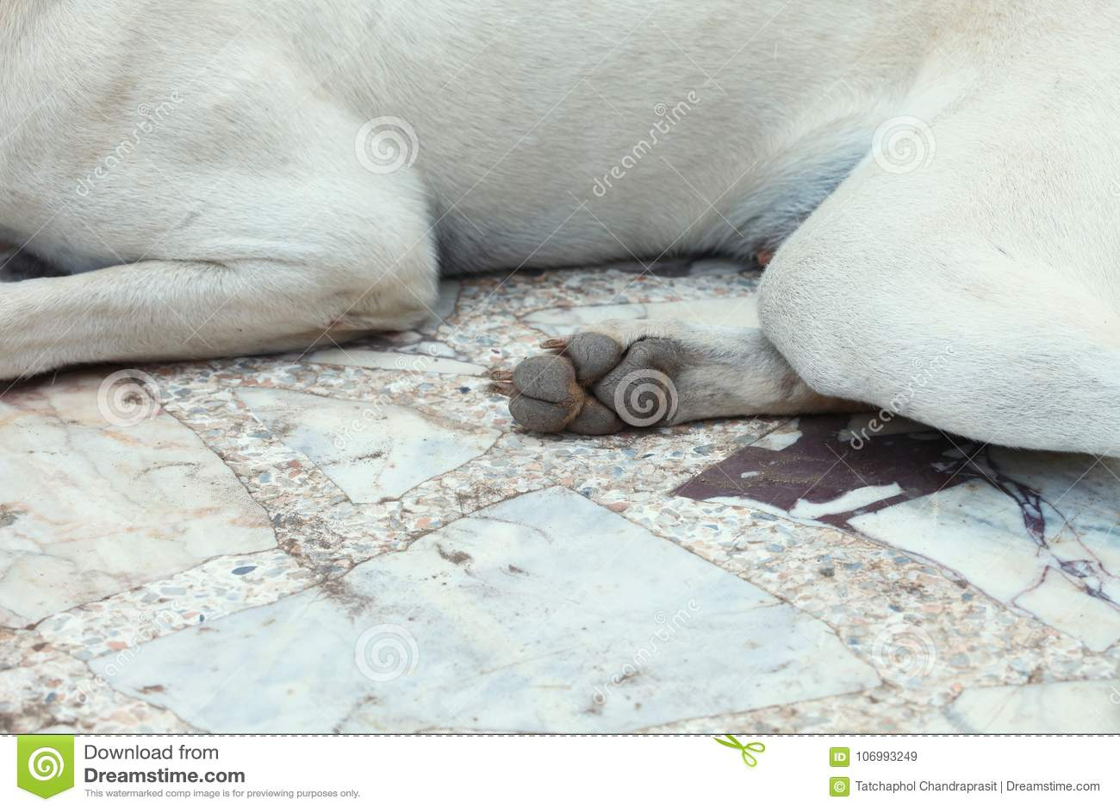 Dog among outdoor scene. stock image. Image of forelimb - 106993249