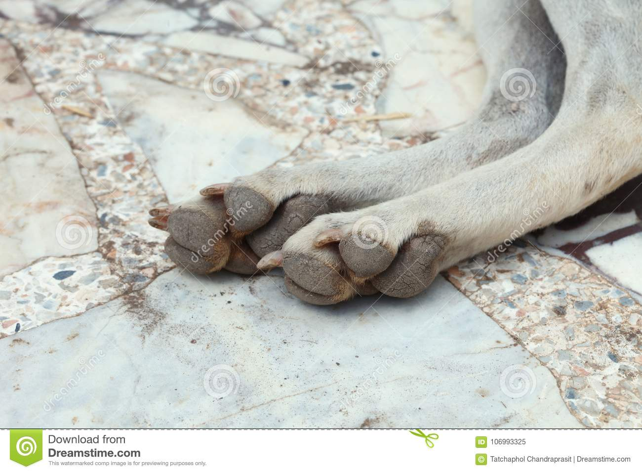 Dog among outdoor scene. stock image. Image of metatarsal - 106993325
