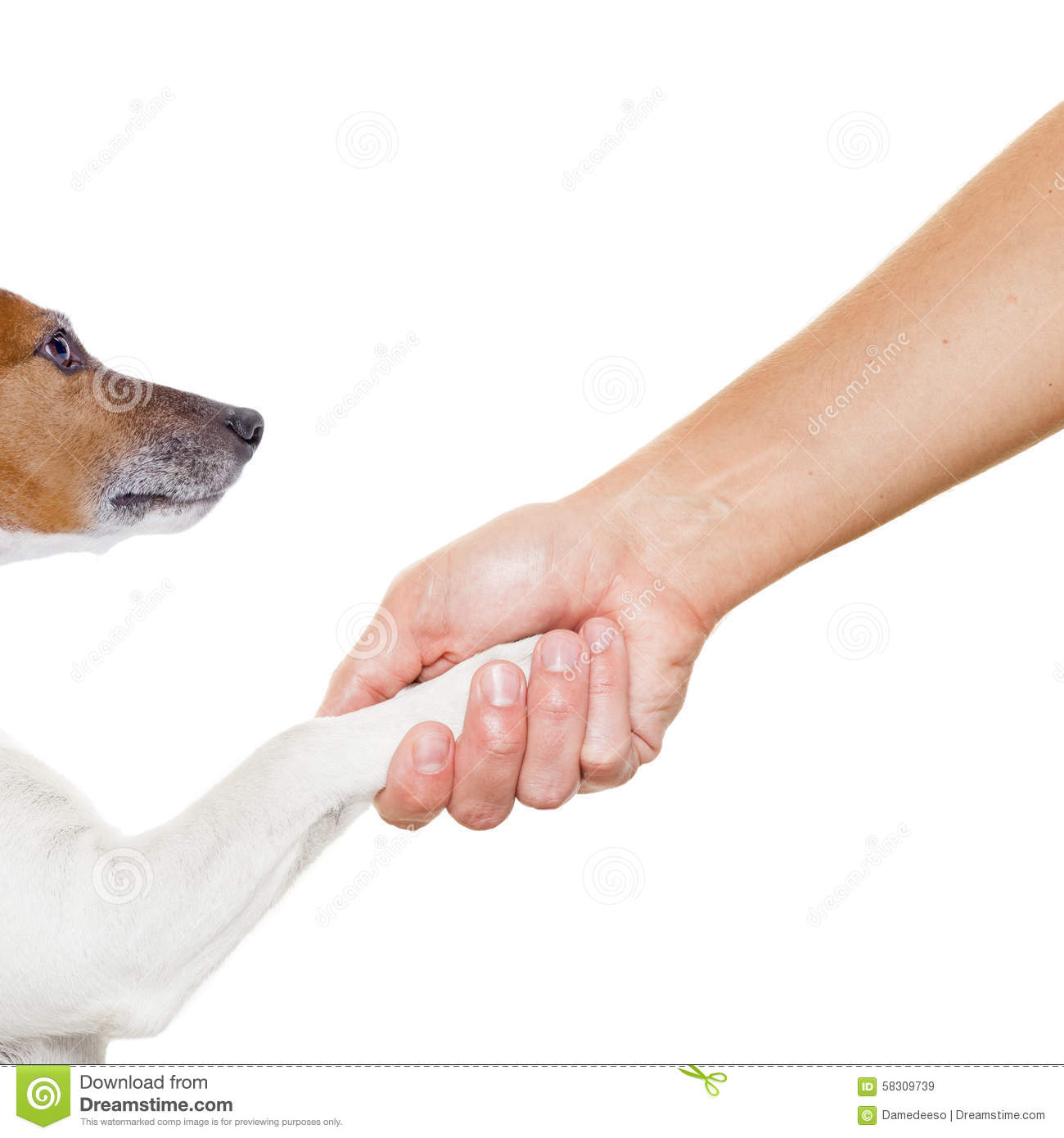 How To Train Your Dog Paw